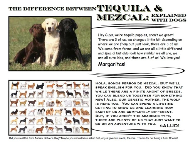 mezcal vs tequila explained with dogs